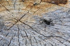 黑甲虫 库存图片