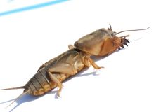 甲虫 免版税库存照片