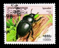 甲虫(Geotrupes sp ),昆虫serie,大约1998年 免版税图库摄影