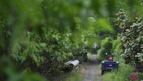 电三轮车在密林 免版税库存照片