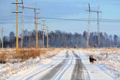 电分站西伯利亚 免版税库存照片