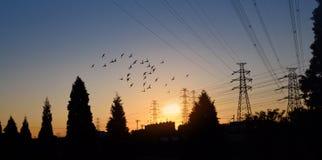 电力定向塔在黎明 库存照片