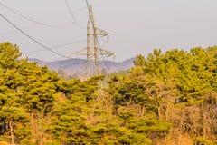 电子塔在森林 库存图片