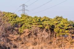电子塔在森林 库存照片