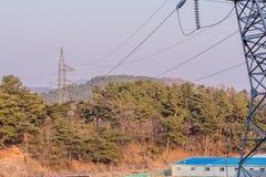电子塔在森林 免版税图库摄影