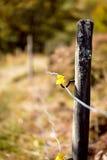 电操刀在动物的一个牧场地附近 免版税库存图片
