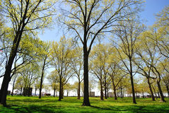 电池城市新的公园约克 库存照片