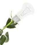 电灯泡上升了 免版税库存照片