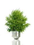 电灯泡光结构树 免版税库存照片