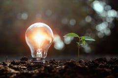 电灯泡和小树成长在土壤与日落 太阳energ 图库摄影