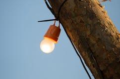 电灯泡在一根木杆烧 图库摄影
