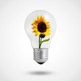 电灯泡在清淡的向日葵里面的概念eco 免版税图库摄影