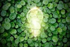 电灯泡在绿色植物,生态概念中打开 免版税库存照片