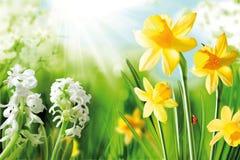 电灯泡快乐的春天 库存照片