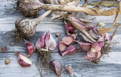 电灯泡新鲜的大蒜朝向三 库存图片