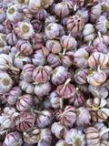 电灯泡新鲜的大蒜朝向三 免版税库存照片