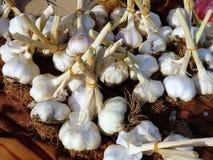 电灯泡新鲜的大蒜 库存照片