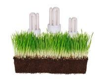 电灯泡概念生态学绿灯 库存照片
