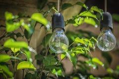 电灯泡的图片与绿色叶子的晴天在背景 免版税库存照片