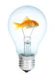 电灯泡鱼小金的光 免版税库存照片