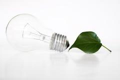 电灯泡eco光 库存照片