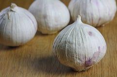 电灯泡garlics 库存图片