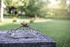 电烙代表在巢的装饰品一只鸟 免版税库存照片
