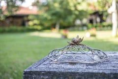 电烙代表在巢的装饰品一只鸟 免版税库存图片