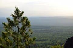 电烫与杉木的乌拉尔山脉piks 免版税库存照片