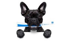 电牙刷狗 免版税库存照片