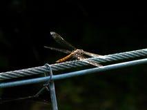 电缆蜻蜓钢 免版税库存图片