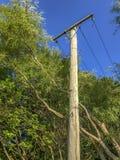 电能木岗位有天空蔚蓝背景 库存照片
