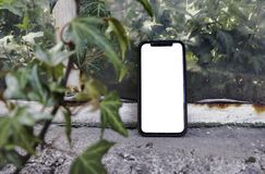 电话在手中在树背景,公园,庭院 应用的布局 有一个白色屏幕的电话 黑屏幕 ?? 免版税库存图片