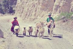 男人和妇女有绵羊和骡子的 库存图片