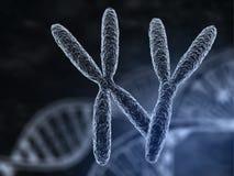 男人和妇女染色体 皇族释放例证