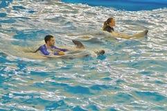 男人和妇女游泳与海豚在Dolphine ` s海湾在普吉岛,泰国 免版税库存照片