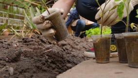 男人和妇女花匠在种植排序幼木在开放地面前自温室 股票录像