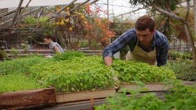 男人和妇女花匠自温室工作 股票录像