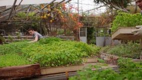 男人和妇女花匠自温室工作 影视素材