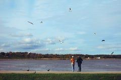 男人和妇女饲料海鸥 免版税库存图片