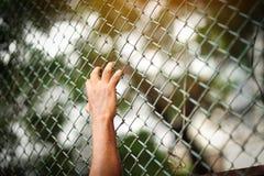 男囚犯在拘留屋子 图库摄影