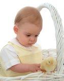 男婴鸡 免版税库存图片