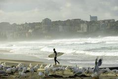 男子气概的海滩的,悉尼,澳大利亚一位冲浪者 免版税图库摄影