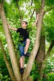 男孩上升的树朝左边看 免版税库存图片
