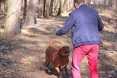 男孩使恼怒他的狗 免版税图库摄影