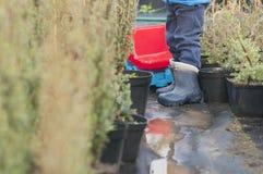 男孩使用与在街道上的一辆大玩具汽车在乡间别墅里,在水坑的雨以后,胶靴 库存图片
