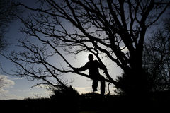 男孩剪影树的 库存照片