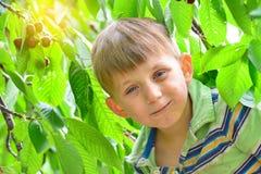 男孩吃在一棵树的一棵红色,成熟樱桃在绿色叶子中 库存图片