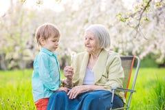 男孩吹的蒲公英种子,当他的曾祖母拿着一朵花时 免版税库存图片