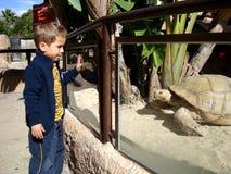 男孩和乌龟 免版税库存照片